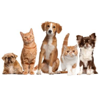 台中搬家-搬家後別忘記更新寵物登記 - 搬家小知識 -